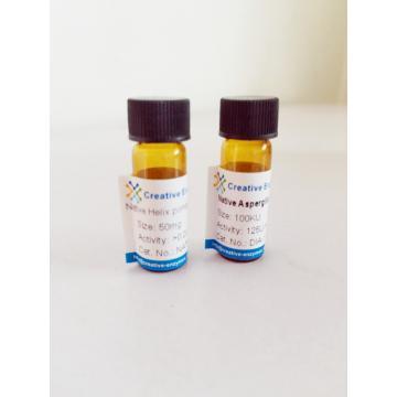 Alanine Racemase (Crude Enzyme)
